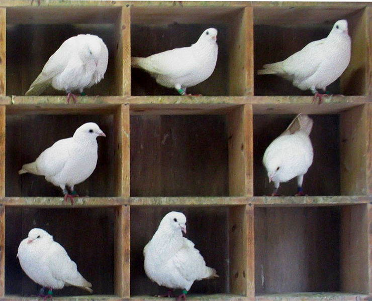 Pigeonholes are for pigeons